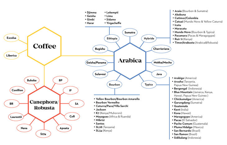 coffee_family_tree