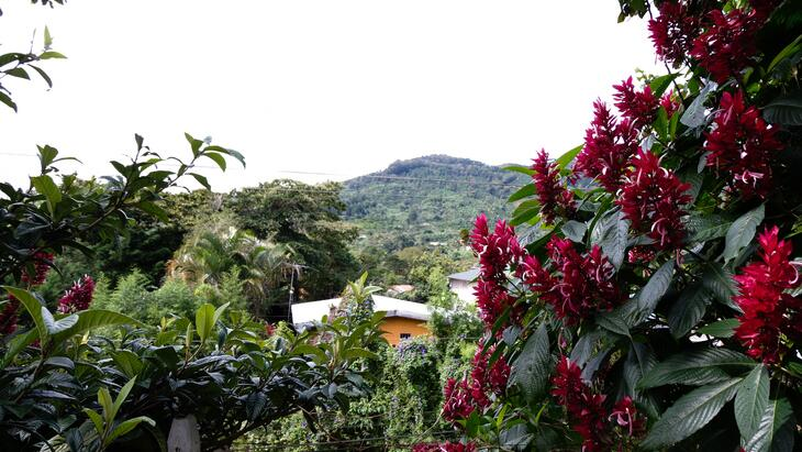 Costa Rica Coffee Nature