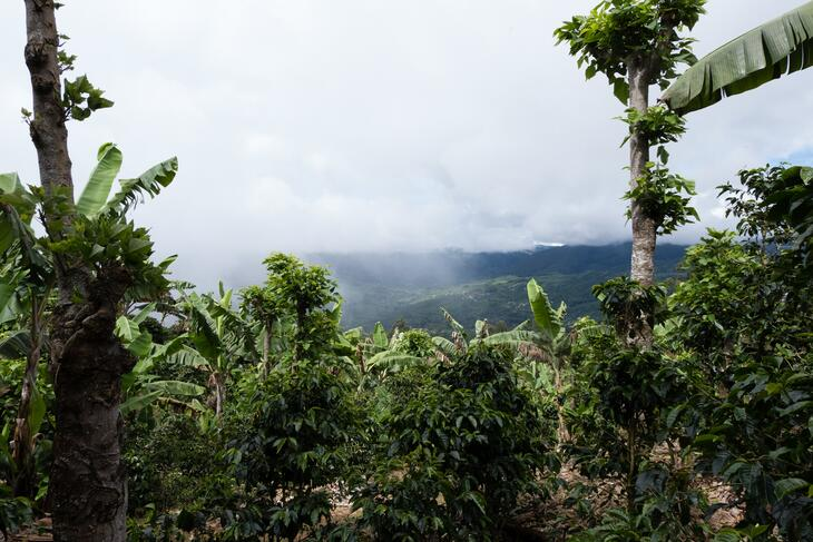 Costa Rica Coffee Cultivation