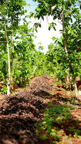 compost coffee farm